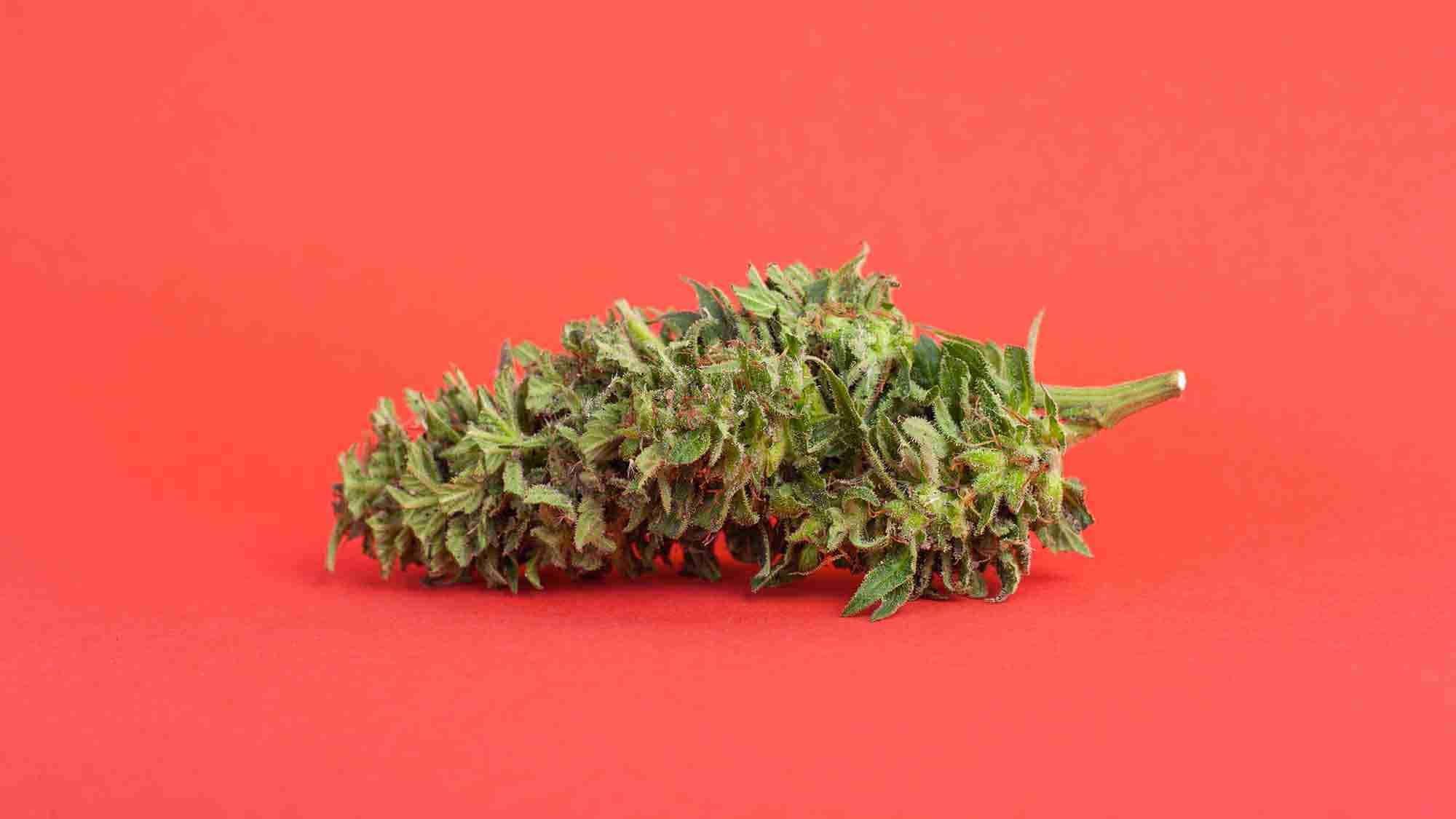Cannabis sativa legale